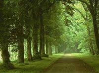 La Humildad, el Camino del Despertar de la Conciencia